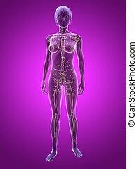 woman - skeleton