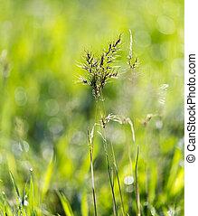 flowering herbs in nature
