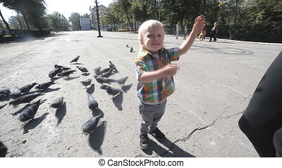 little Boy and pigeons in park