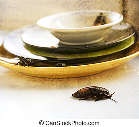dirty kitchen pile of filthy dishes infested with roaches