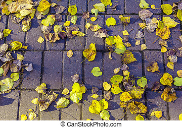 Yellow and Dry Leaves on Road from Brick