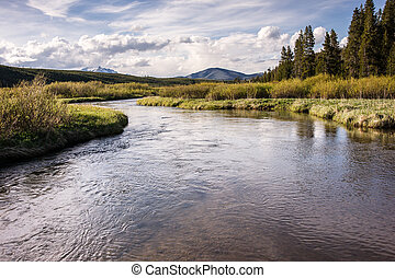 Yellowstone Back Country Trout Stream - A pristine trout...