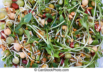 Micro greens salad. - Microgreens salad with green fresh...