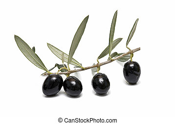 A branch with black olives.