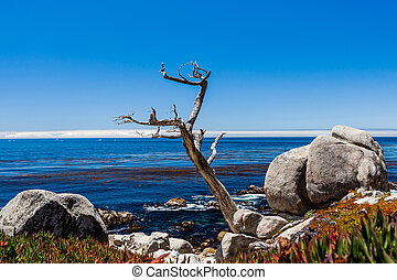 Pescadero Point at 17 Mile Drive in Big Sur California -...