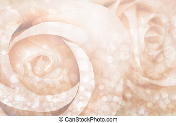 rose background - Close up ceter rose with bokeh for...
