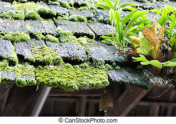 fern, moss and plant growing on the old roof - fern, moss...