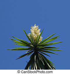 flowering Yucca plant against blue sky background