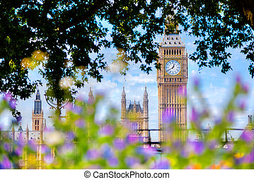 Big Ben,, London UK. View from a public garden with flowers...
