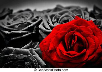 romántico, rosa, saludo, contra, rosas, negro, rojo, blanco,...