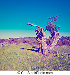 Galilee - Broken Tree on the Clearing in Galilee, Instagram...
