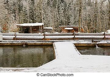 Snowy view of fish pond at Herzogliche Fischzucht in Wildbad...