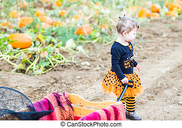 Pumpkin patch - Toddler in Hallooween costume playing at the...