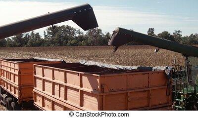 Combines unloading sunflower