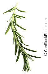 Rosemary sprig over white - A sprig of Rosemary officinalis,...
