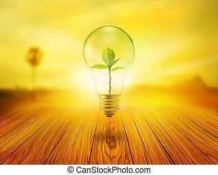 木制, 光, 裡面, 樹, 綠色, 燈泡, 日出