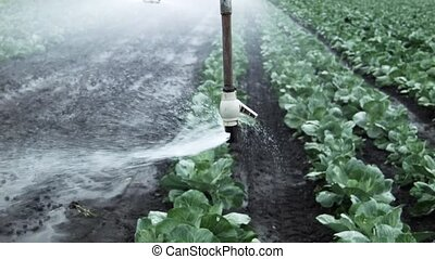 field irrigation of cabbage agricultural mechanics