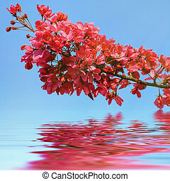 Cherry Flowers - Branchlet of the Cherry Tree with Red...