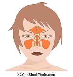 nasal sinus - frontal sinus - vector image of nasal and...