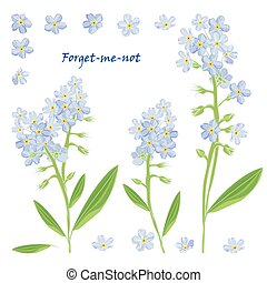 Set of bouquet beautiful forget-me-not flowers Vector...