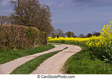 Dirt road in the rapeseed oil field - Yellow rapeseed field...