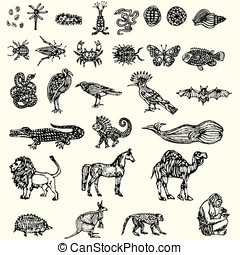 illustration with different animals collection vector illustration