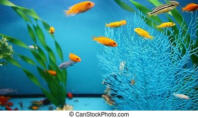 blue aquarium background calm fish swim grass video saver -...