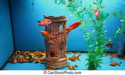 aquarium background calm fish swim grass blue video saver...
