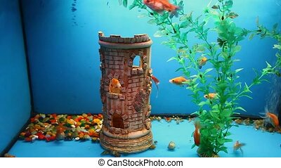 blue aquarium background calm fish swim grass - blue...