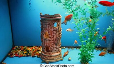 aquarium blue background calm fish swim grass video saver...