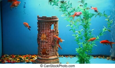 aquarium background fish blue calm swim grass - aquarium...
