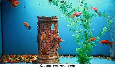 aquarium background fish blue calm swim grass - aquarium...