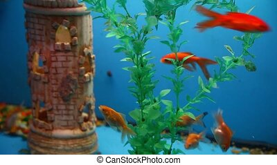 background fish blue aquarium calm swim grass saver video -...