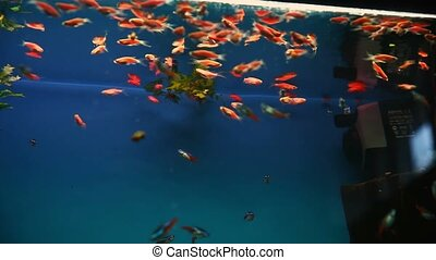 aquarium background calm fish blue swim grass video saver...