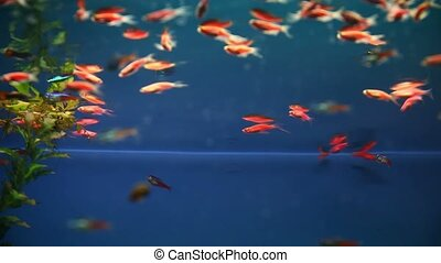 aquarium background calm fish swim blue grass video saver...