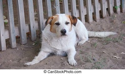 Homeless dog looking at camera resting near the wooden fence