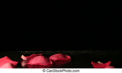 Rose petals falling into the water Slow motion - Valentines...