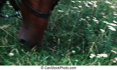 Horse eating lush grass, close-up view - A brown horse in a...