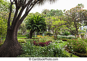 Garden in Funchal city, Madeira island, Portugal