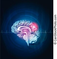 Brain cross section, arteries abstract background