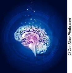 Healthy Brain cross section, vessels