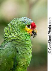 parrot, ,