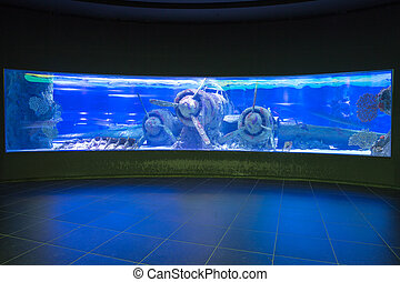 Antalya aquarium of Turkey - Sunken plane under water in...