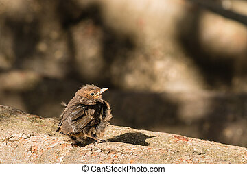 baby blackbird basking on tree branch