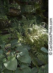 Shade garden - Hostas and Ferns in a shade garden