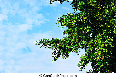 green leaves in sunshine on blue sky background, blank text