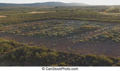 Sunset over beehives in the wild - Aerial view sunset over...