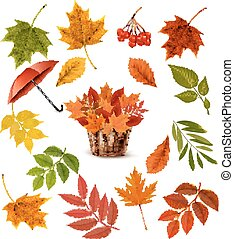 Set of colorful autumn leaves and objects. Vector...