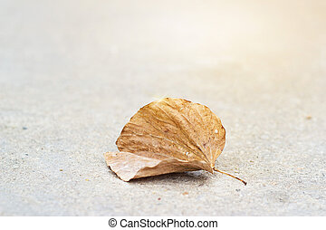 Dry leaf on street background, warm color tone and soft...
