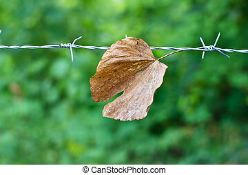 Dry leaf on a wire in nature background, soft focus